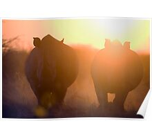 Rhinos at sunset Poster