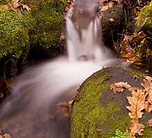 Autumn Stream by David Clewer