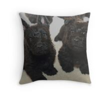 Scottish Terrier Pups Throw Pillow