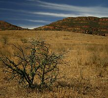 Wilpena Pound by Becky Hirst