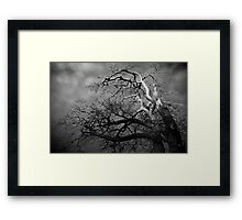 Trees #01 Framed Print