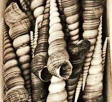Vintage shell collection in sepia by kitschstock