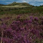 purple Hay tor by David Clewer