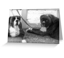 Tongues.......  -Boxer Dogs Series- Greeting Card