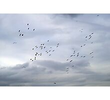 Cranes in the Clouds Photographic Print