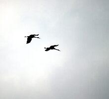Monogamous Cranes by rdshaw