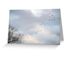 Cranes, Trees and Sky Greeting Card
