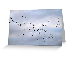 Cranes in the Sky Greeting Card