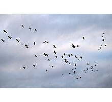 Cranes in the Sky Photographic Print