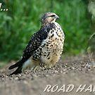 Roadhawk by Normcar
