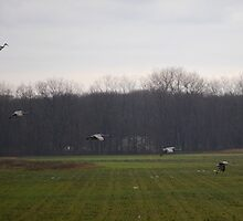 Cranes Landing 4 by rdshaw