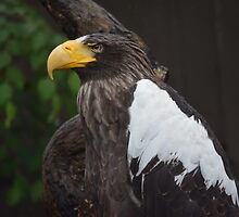 National Aviary Pittsburgh Series - 24 by sarahshanely