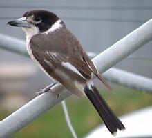 Female Butcher Bird by Jan Richardson