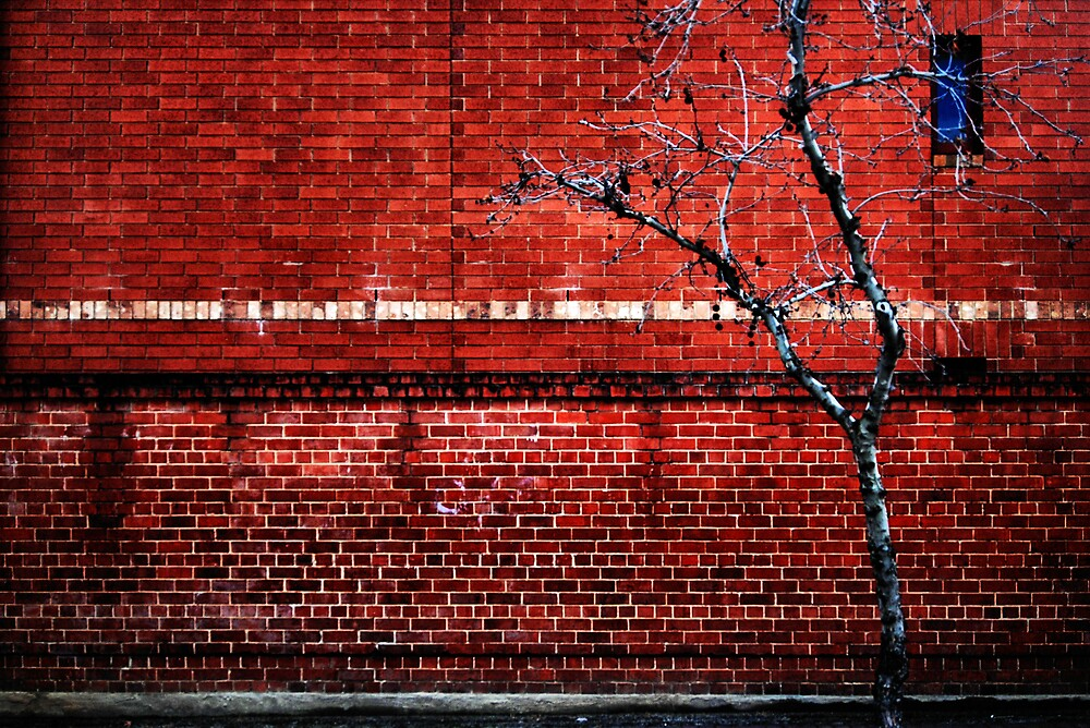 Red Brick Wall, Bare Tree and Blue Window by Janet Leadbeater