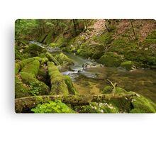 Along the Valserine river Canvas Print