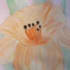 Daylily by Alison Pearce