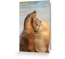 Friends Forever - Galapagos Sea Lions Greeting Card