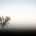 Ghost Tree by alissasanderson