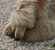 Xanthe - Afghan Hound by SeaMonKeY69