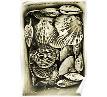 Vintage scallop shell collection in sepia Poster