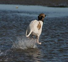 Kirislin Mistral - Greyhound by SeaMonKeY69