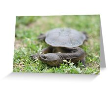 Long Neck Turtle Greeting Card