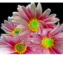 Neon Daisies!!  Photographic Print