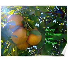 Citrus splendor Poster