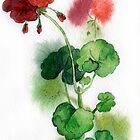 geraniums by OlgaBerlet