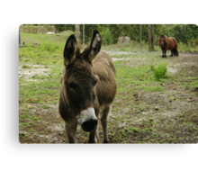 Donkey and Nugget Canvas Print