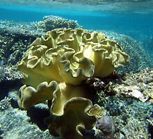 Great Barrier Reef by Cheryl Parkes