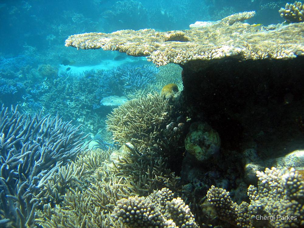 Plate Coral by Cheryl Parkes
