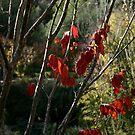 Colours of the Season - Jerusalem by Nira Dabush