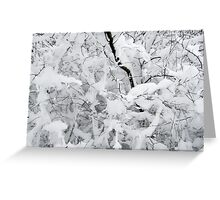 White silence Greeting Card
