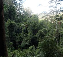 Australian Rainforest by Cheryl Parkes