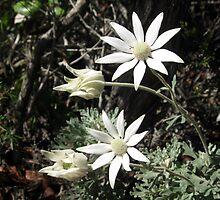Flanel Flower by Cheryl Parkes