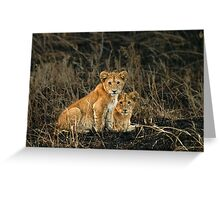 Twin gazes Greeting Card