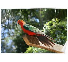 King Parrot Poster