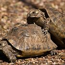 mr and mrs shell by mickeyb