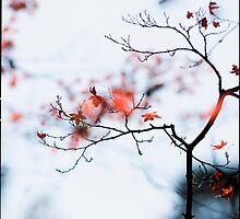 I see strawberries in the bokeh; Rikugien Park, Tokyo by Alfie Goodrich