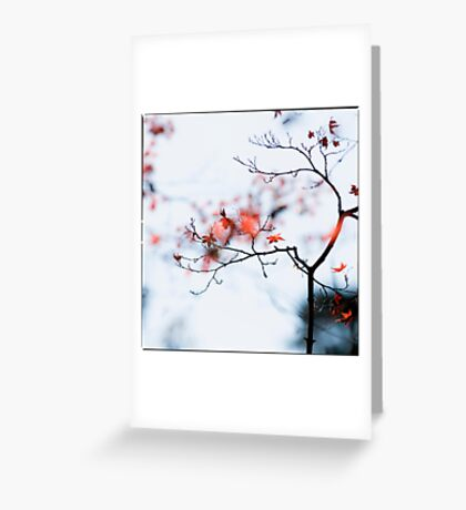 I see strawberries in the bokeh; Rikugien Park, Tokyo Greeting Card