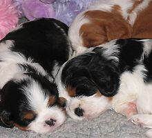 Three Sleepy Puppies by Jenny Brice