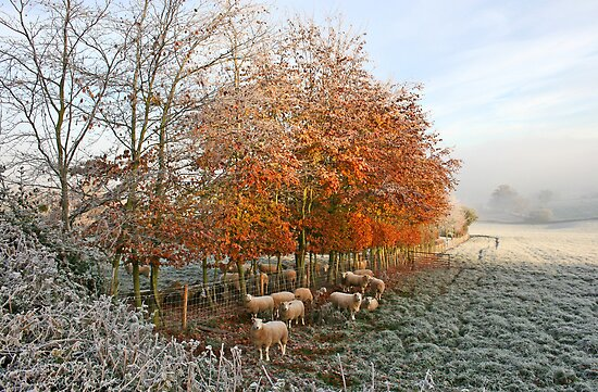 Baa, It's Cold Out Here! by Geoff Carpenter