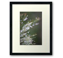 Beautiful Bokeh Framed Print