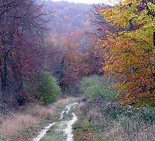 autumn colours by Caroline Anderson