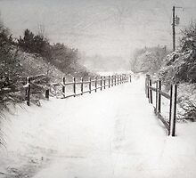 Silence of Snow  by Susan Werby