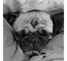 Sleep It Off Photographic Print