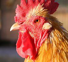 Rooster in the Henhouse by Jocelyn Hyers