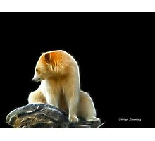 lonely bear Photographic Print