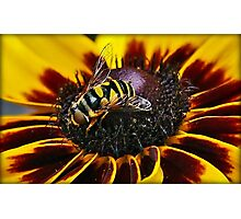 Bee Duet Photographic Print